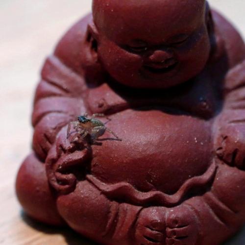 Bouddha 3 filtre