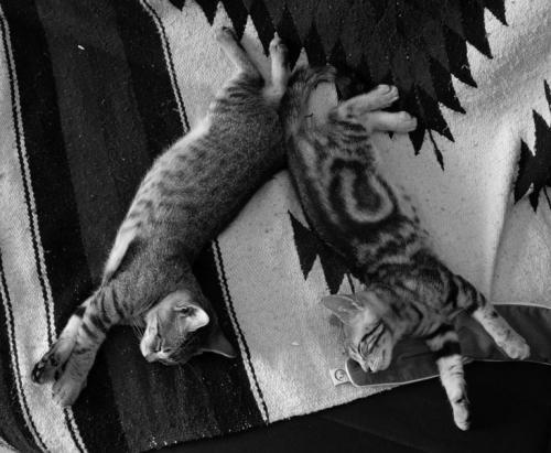 Cat Mirror Twins