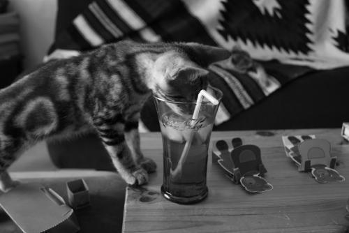 Cat Perrier