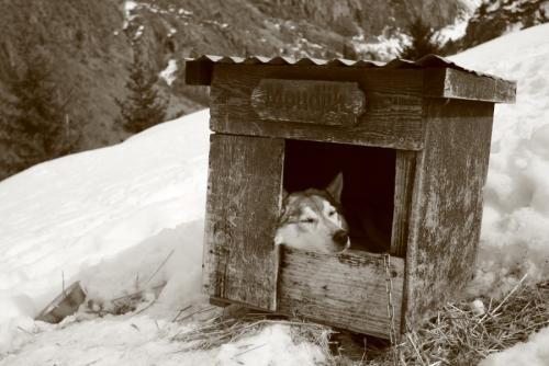 Dog Hermine2