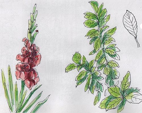 Fleurs Gravelle1