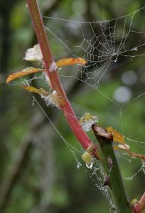 Gravelle jardin pluie 0059