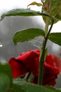 Gravelle jardin pluie 0065