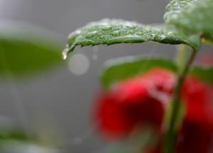 Gravelle jardin pluie 0067