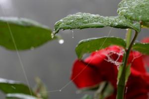 Gravelle jardin pluie 0068