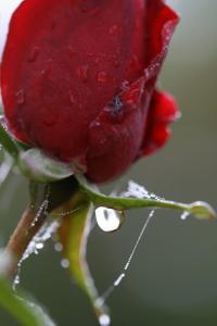 Gravelle jardin pluie 0104
