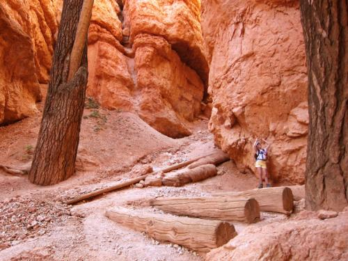Les Gigantesques de Bryce