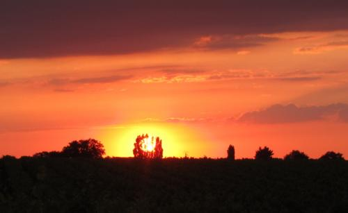 Orange Sunset 4105