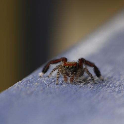 SpiderOutside