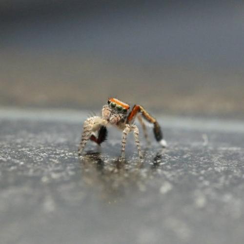 SpiderTiltedHead