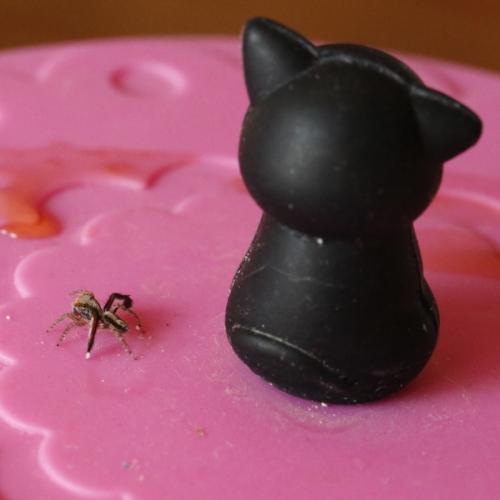Spider  kitty2