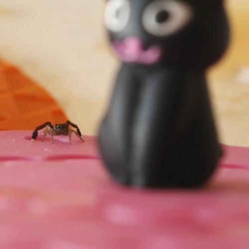 Spider  kitty4