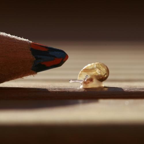 escargot nain