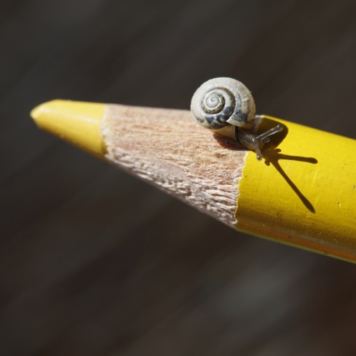 escargot nain 2